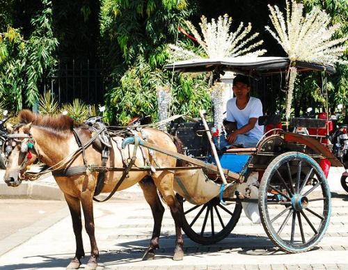 Jakarta horse carriage, Jakarta tourist spot, Jakarta tour, Jakarta trip, Day trip Jakarta
