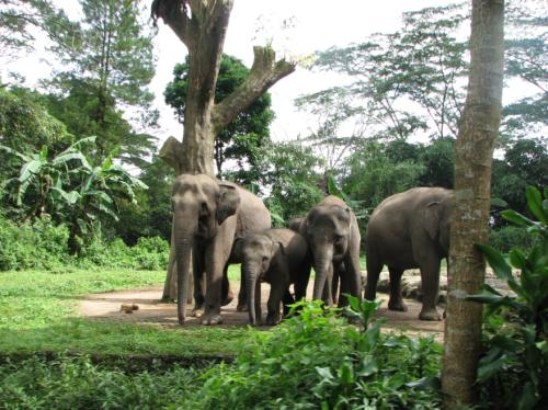 Taman Safari, Taman Safari Jakarta, Indonesia, Bogor, Bandang, Taman Safari trip