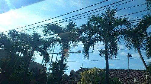 jakarta blue sky, jakata coconut tree