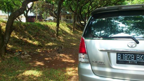 Jakarta street scene, Jakarta snapshot, Jakarta cat, snapshot Jakarta, street scene Jakarta
