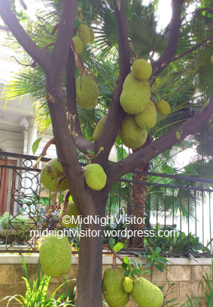 tropical fruit, jakarta fruit, jack-fruit tropical