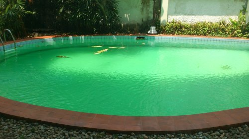 pool dirty, swimming pool maintanance