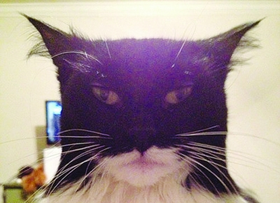 batman cat, batman look like cat, cat black and white, serious cat with batman hat
