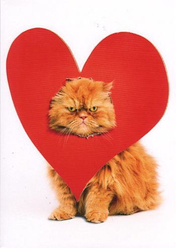 cat and red heart valentine's day fun picture, valentine's day cat, red heart cat