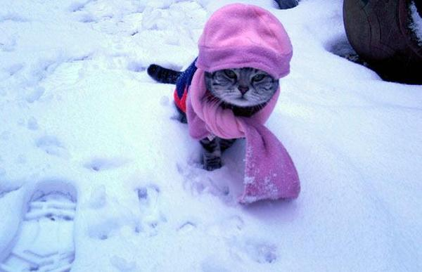 snow cat purple hat, top hat cat, best top hat cat, best top cat, world's best cat, world's best hat, worst snow in England